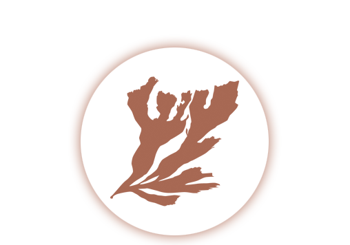 Deep Moda Vegan